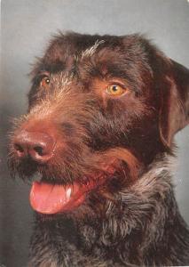 Deutsch - Dog