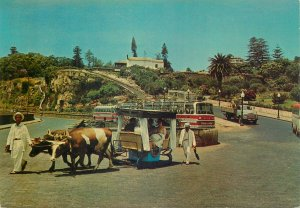 Portugal Postcard Madeira native people bullock cart