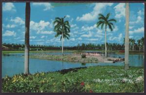 Flamingo Island,Hialeah,Miami,FL Postcard BIN