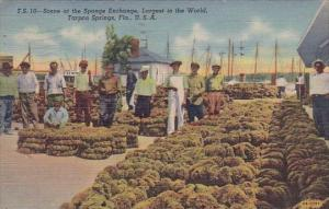 Florida Tarpon Springs Scene At The Sponge Exchange Largest In The World 1951