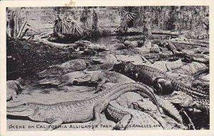 California Los Angeles Alligator Farm Scene