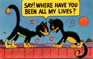 Humour Romantic Cats Say! Where Have You Been All My Lives