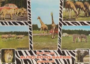 Stuckenbrock Wildlife German Safari Park Postcard