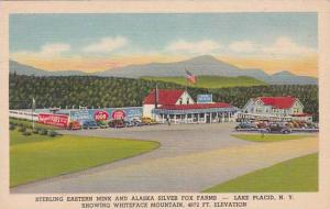 New York Lake Placid Sterling Eastern Mink And Alaska Silver Fox Farms