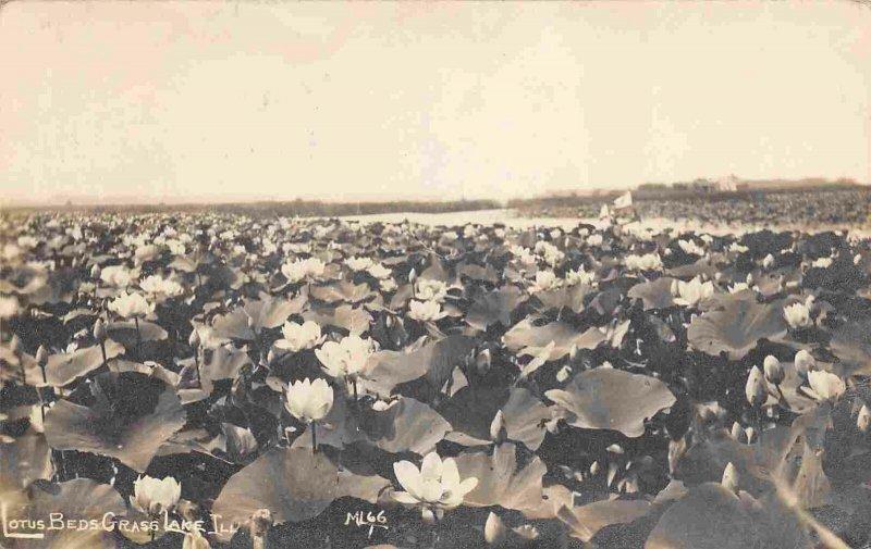 Lotus Beds Grass Lake Fox Lake Illinois 1912 RPPC Real Photo postcard
