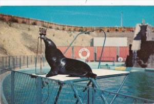 California Marineland Si The Sea Lion