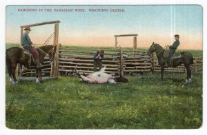 Ranching In The Canadian West, Branding Cattle