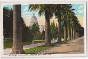 Ave of Palms, Sacramento CA