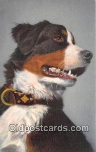 Berner Sennenhund, Bouvier Bernois Swiss Mountain Dog Postcard Post Card Swis...