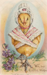 EASTER , 00-10s ; Dressed Chick
