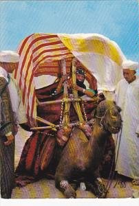 A Wedding In The Upper Atlas With Camel