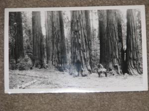 RPPC, Congress Group-Sequoia Nat`l Park, Calif., unused vintage card