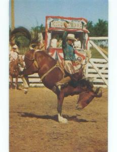 Pre-1980 RODEO BUCKING BRONCO Sentinel Butte - Near Medora & Dickinson ND E6025