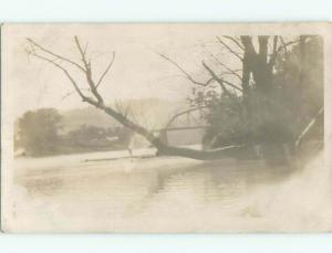 rppc Pre-1918 TREE BRANCHES ABOVE FLOOD WATERS AC7580