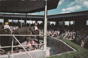 Elephant Show, Forest Park, ST LOUIS, Missouri,