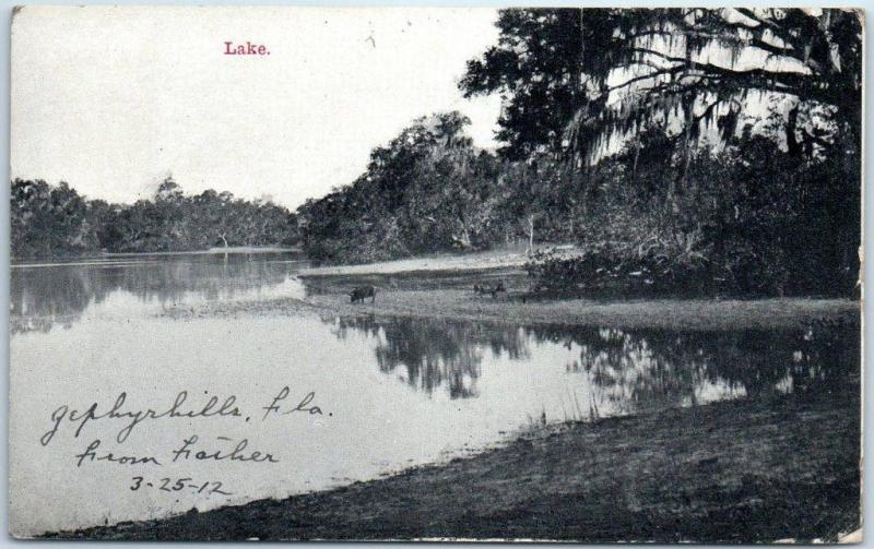 Zephyrhills, Florida Postcard Lake Shore View Zimmerman w/ 1912 FL Cancel