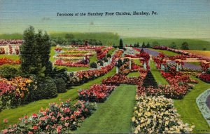 Pennsylvania Hershey Terraces Of The Hershey Rose Garden Curteich