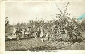C-1910 Farm Agriculture Hood River Apple Orchard Postcard 3750