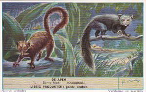 Liebig S1604 Monkeys II No 1 Bonte Maki - Knaagmaki