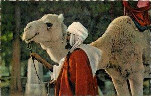 Tunisia chamelier camel ethnic type