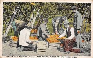 Mich. Grading and Assorting Peaches, near Benton Harbor and St. Joseph 1924