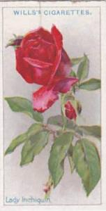 Wills Vintage Cigarette Card Roses 1926 No 26 Lady Inchiquin
