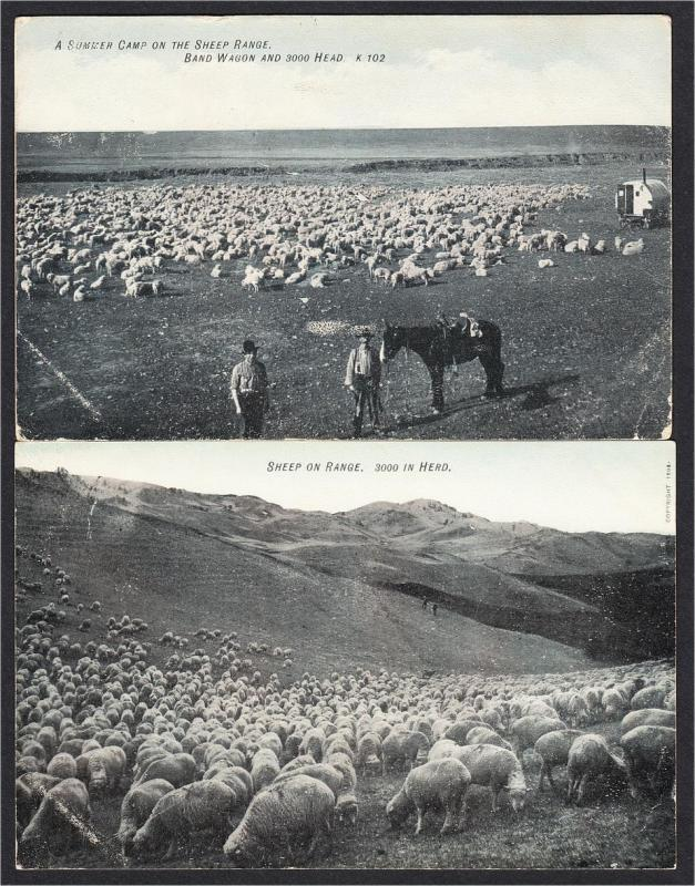 Cowboys on Sheep Range Postcards Published by Charles Morris Chinook MT 1900s