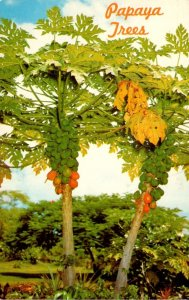 Hawaii Papaya Trees Bearing Fruit 1973