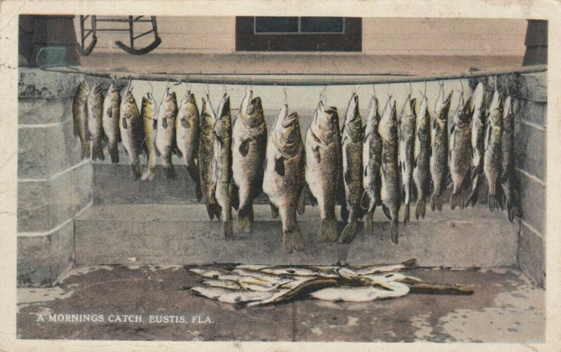 EUSTIS , Florida , 1925 ; A morning Catch