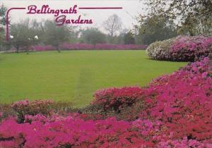 The Great Lawn Bellingrath Gardens Theodore Alabama 1998