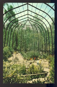 San Diego, California/CA Postcard, Tropical Rain Forest, San Diego Zoo