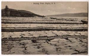 Drying Fish, Digby NS
