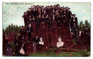 Early 1900s Cedar Stump, Sedro, WA Postcard *6E(2)20
