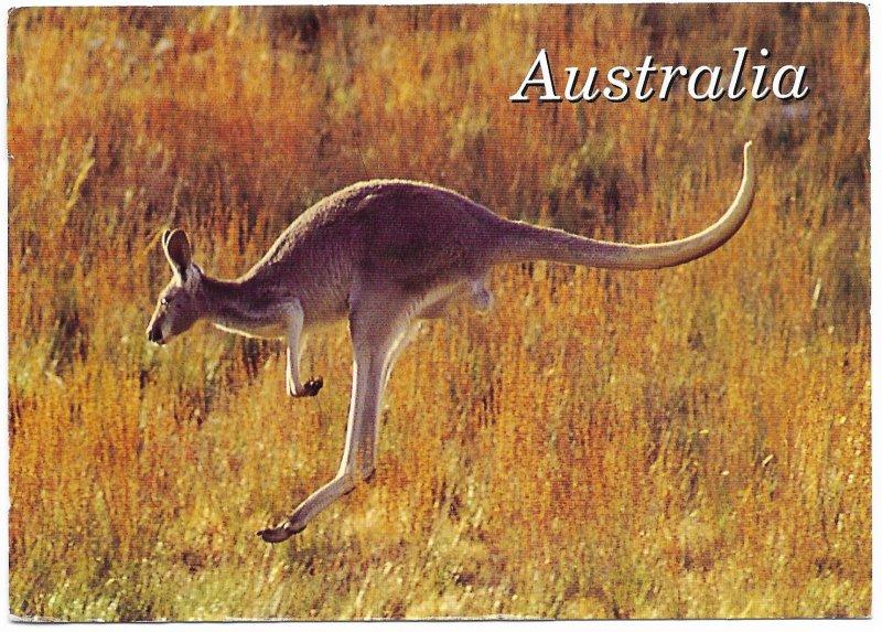 Australia. Eastern Grey Kangaroo.  Used. Nice postage.