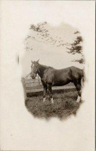 Horse Unused Real Photo Postcard F13