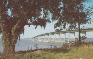 Waterfront View, Tree With Moss Near the Highway Bridge, Lake Marion, Near Sa...