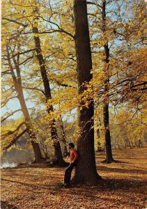 France Glacee Forest Autumn Lake Lac