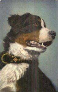 Shepherd Dog Old Postcard #159