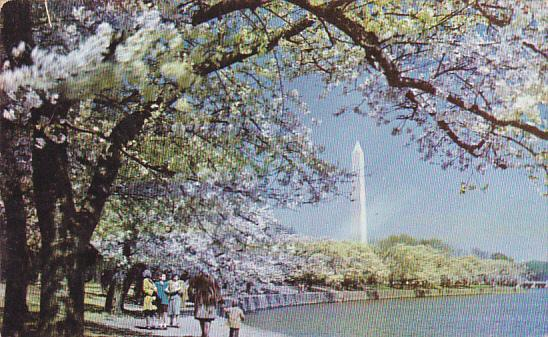 Washington Monument With Cherry Blossoms Washington DC 1954