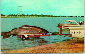 EXAGGERATION Comic Postcard Fishing / Giant Fish on Boat Trailer - 1973 Wyoming