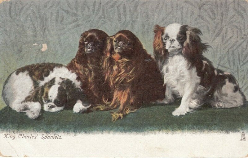 King Charles' Spaniels (Dogs), PU-1906; TUCK