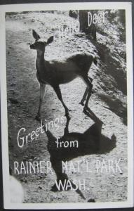 Hello Deer Greetings From Rainier National Park 1951 Real Photo Postcard