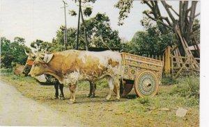 Costa Rica Carreta Tipica Ox Cart sk4199