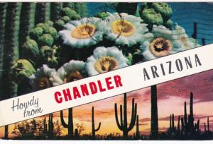 Arizona Howdy From Chandler Showing Saguaro Cactus and Blossoms 1965