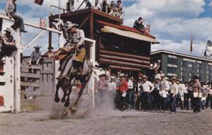 Bronc Riding , Stampede Rodeo , Calgary , Alberta , Canada , 50-60s