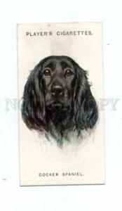 166930 COCKER SPANIEL WARDLE Player CIGARETTE card ADVERTISING