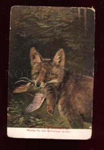 018072 Nice FOX w/ Bird. After Hunt. Vintage colorful PC