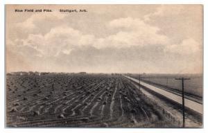 Rice Field and Pike, Stuttgart, AR Postcard