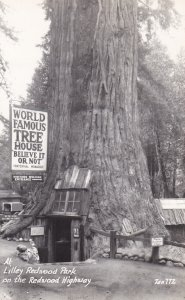 California Lilley Redwood Park On Redwood Highway Woorld Famous Tree House Re...