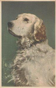 DOG ; Head Portrait , 1930s